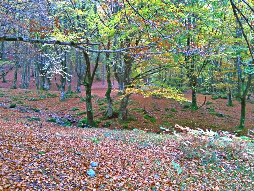 de camino a Urbia a través de un bosque