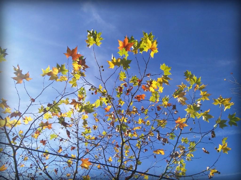hojas que se mantienen en pie