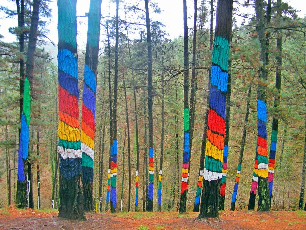 El bosque de los colores brave readers - Arboles pais vasco ...