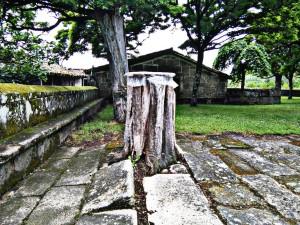 árbol con fuerza
