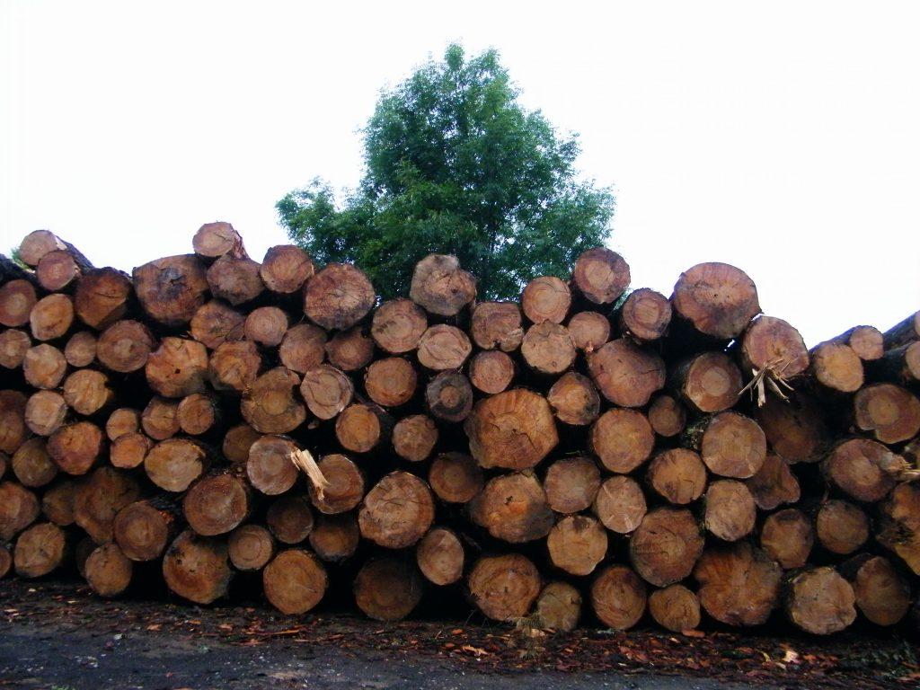 Árboles talados, huelen a madera, incitan al fuego