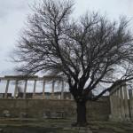 Bergama; árboles en las ruinas de Turquía