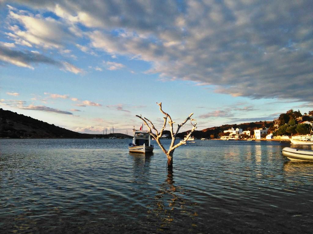 Árboles que asoman en el mar que besa Gümüslük